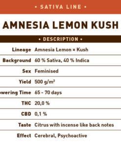 Amnesia Lemon Kush2