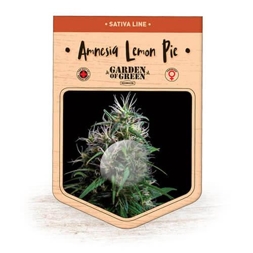 Amnesia Lemon Pie