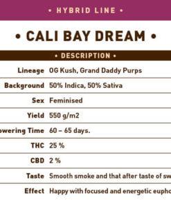 Cali Bay Dream1