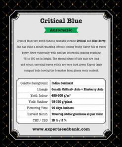 Critical Blue Auto1