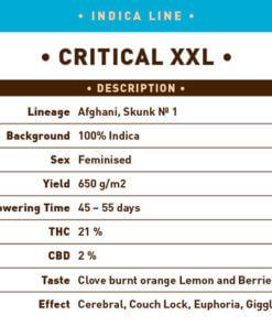 Critical XXL1