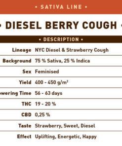 Diesel Berry Cough1