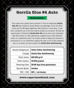 GG 4 × Auto2