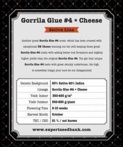 GG 4 × Cheese2