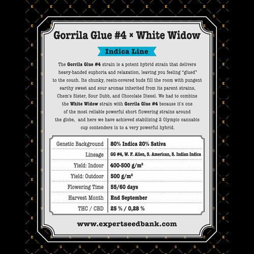 GG 4 × White Widow2
