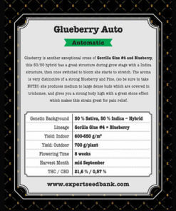 Glueberry Auto2