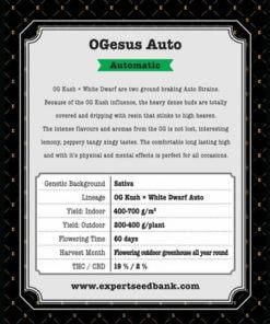 OGesus Auto2