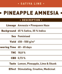 Pineapple Amnesia1