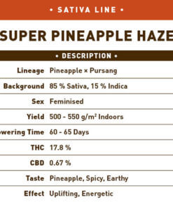 Super Pineapple Haze1