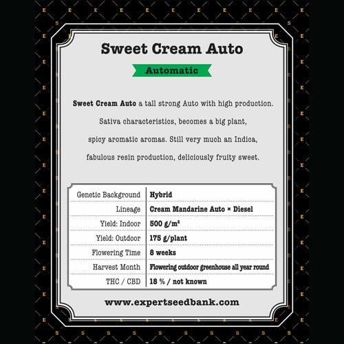 Sweet Cream Auto1