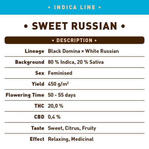 Sweet Russian1