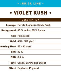 Violet Kush1