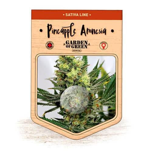 pineapple amnesia