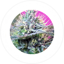 Flowering Type