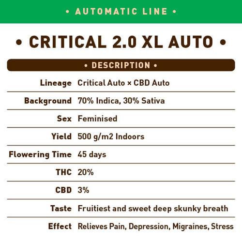 Critical 2.0 XL Auto1