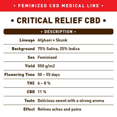 Critical Relief CBD1