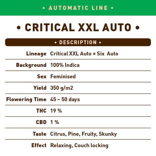 Critical XXL Auto1