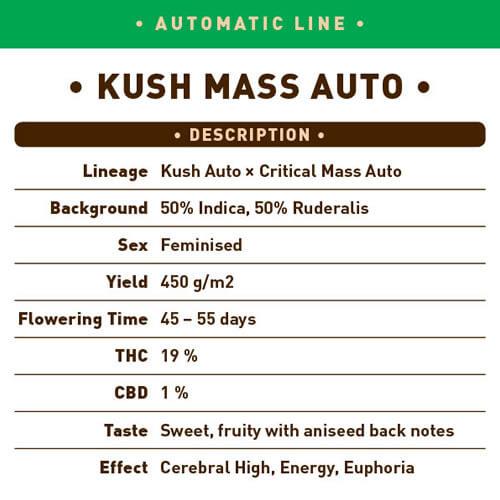 Kush Mass Auto1
