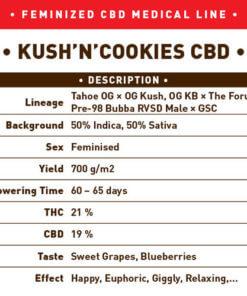 Kush N Cookies CBD1