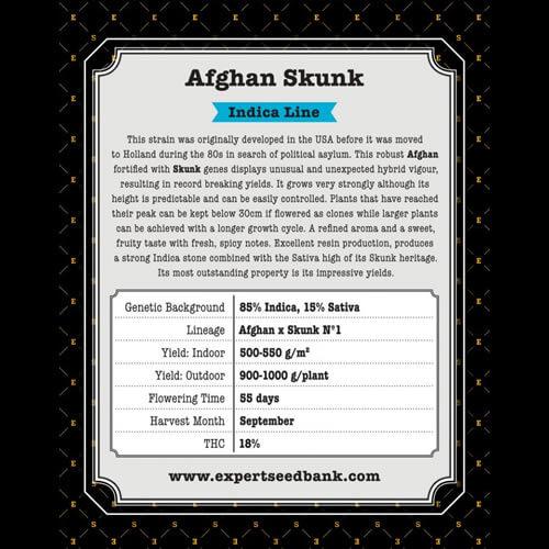 afghan skunk bulk2