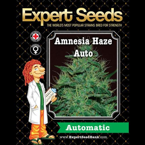 amnesia haze auto bulk1