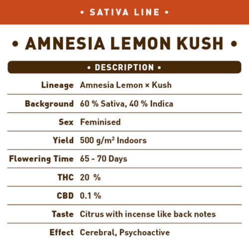 amnesia lemon kush bulk1