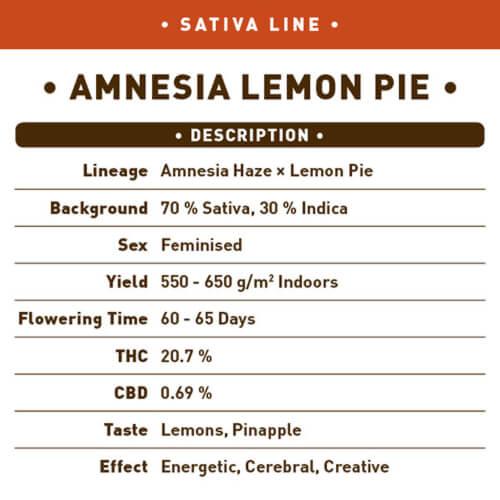 amnesia lemon pie bulk1