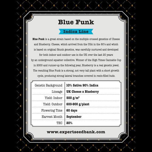 blue cheese bulk2