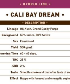 cali bay dream bulk1
