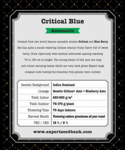critical blue auto bulk2