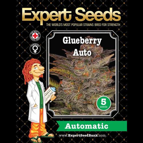 glueberry auto bulk1