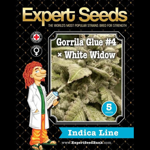 gorrila glue 4 x white widow bulk1