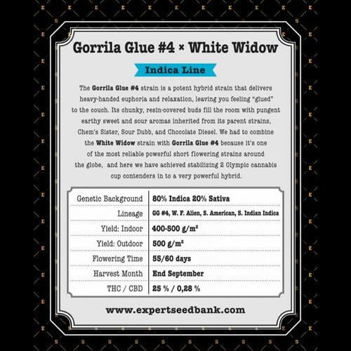 gorrila glue 4 x white widow bulk2