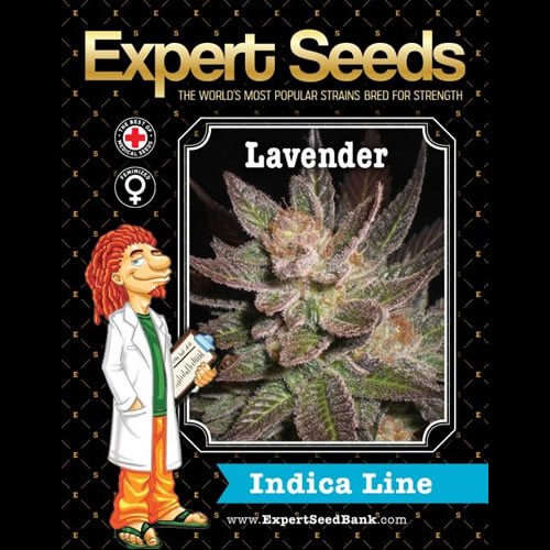 lavender bulk1