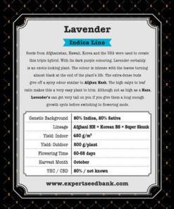 lavender bulk2