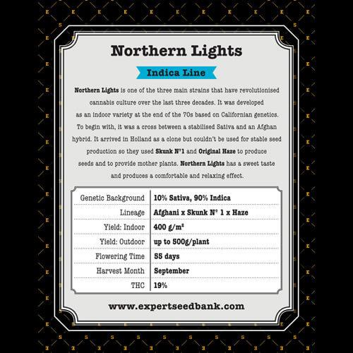 northern lights bulk2