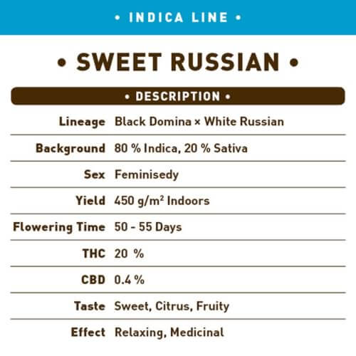 sweet russian bulk1