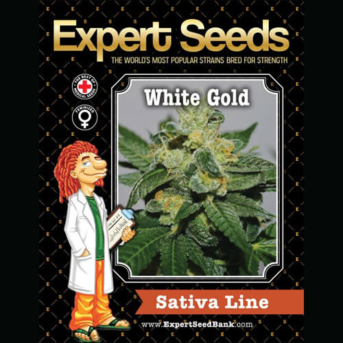 white gold bulk1
