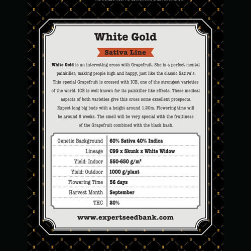 white gold bulk2