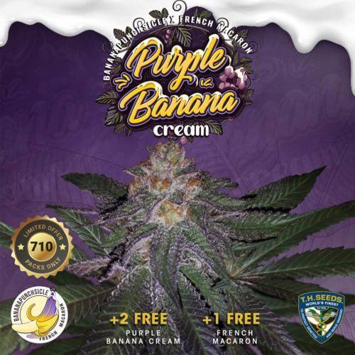purple banana cream female cannabis seeds thseeds